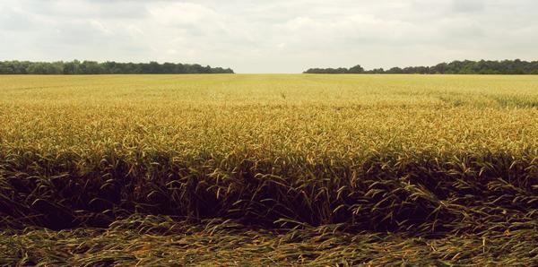 Conociendo Al Consumidor Agrícola: Camino A La Concentración