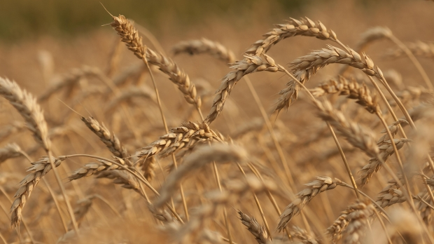 Mercado De Agroinsumos:  Evolución Y Desafíos