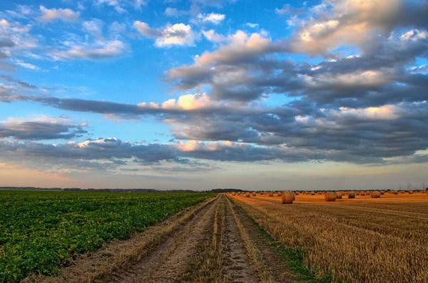 Efecto De Los Rebates De Proveedores En La Industria De La Distribución Agrícola : ¿Pan Para Hoy Y Hambre Para Mañana?